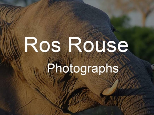 Ros Rouse Photographs