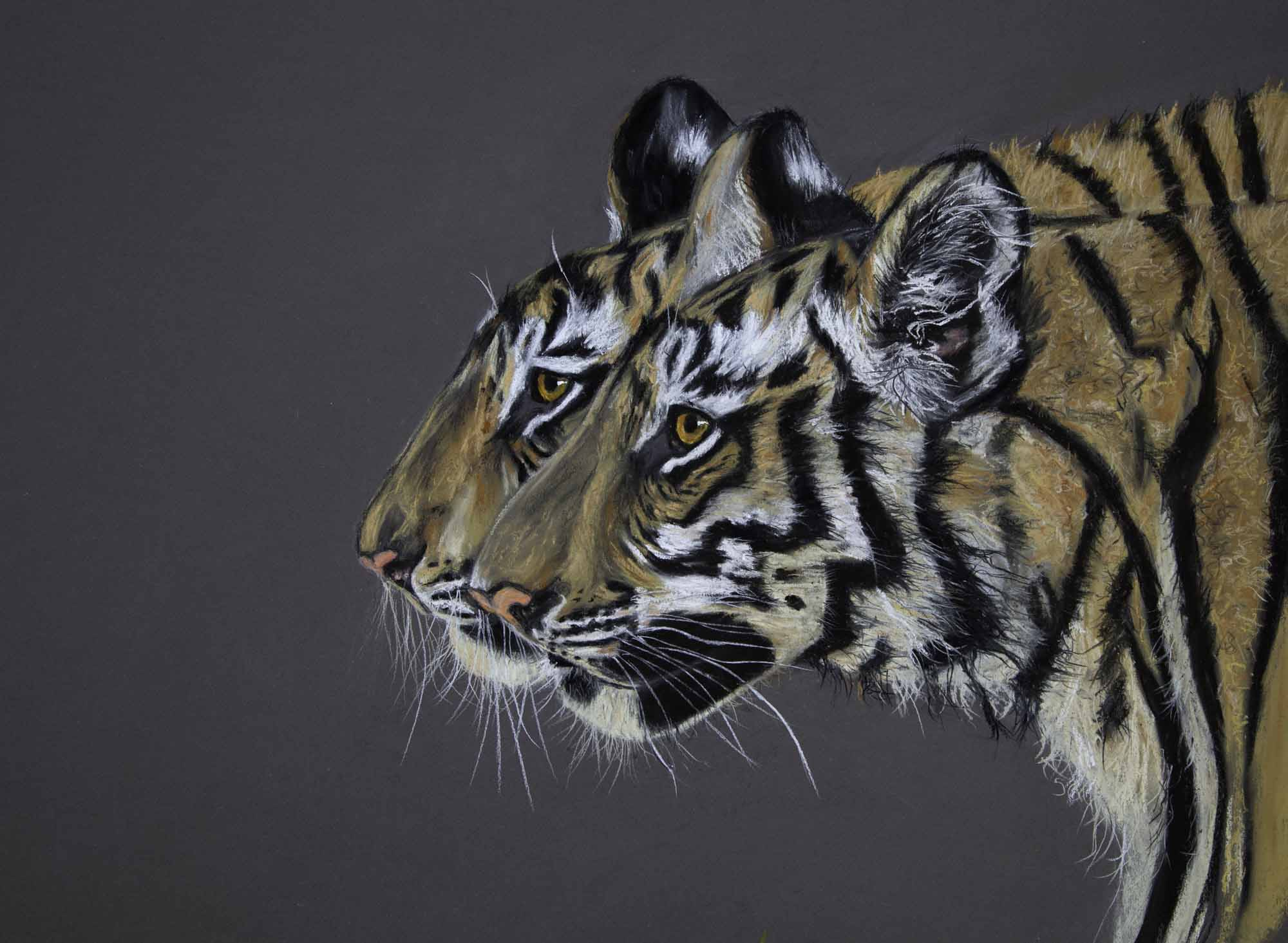 Indian wildlife walking side by side two tigers india pastel portrait endangered