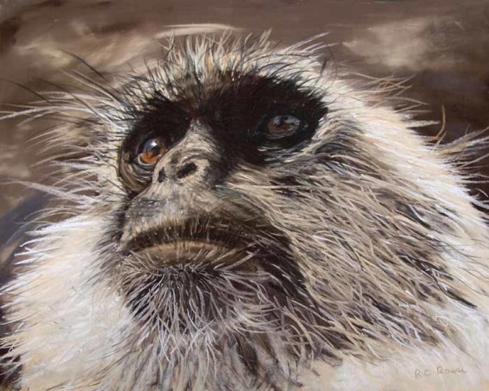 distant stare langur monkey India Pastel Portrait