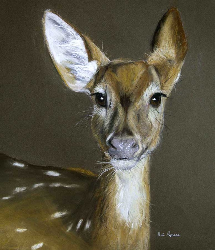 chittal deer wild india pastel-portrait