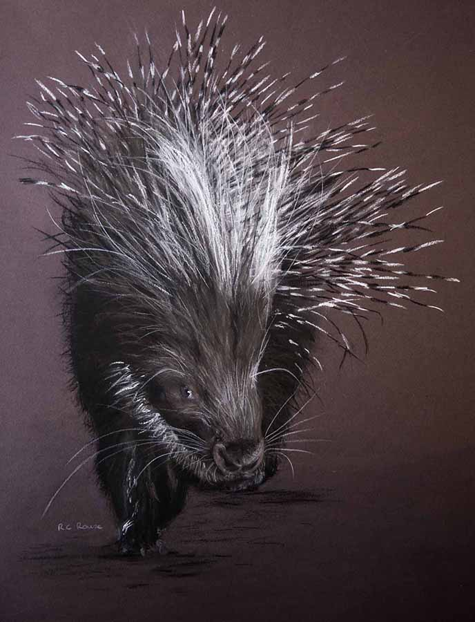 Snuffing in the dusk - porcupine black white pink pastel portrait