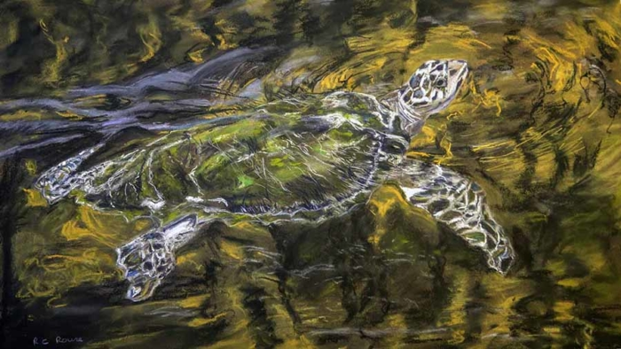 Swimming Hawksbill Turtle pastel portrait