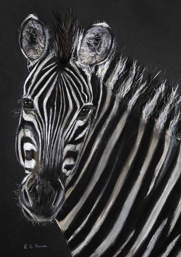 Zebra wild stripes black and white Africa pastel portrait
