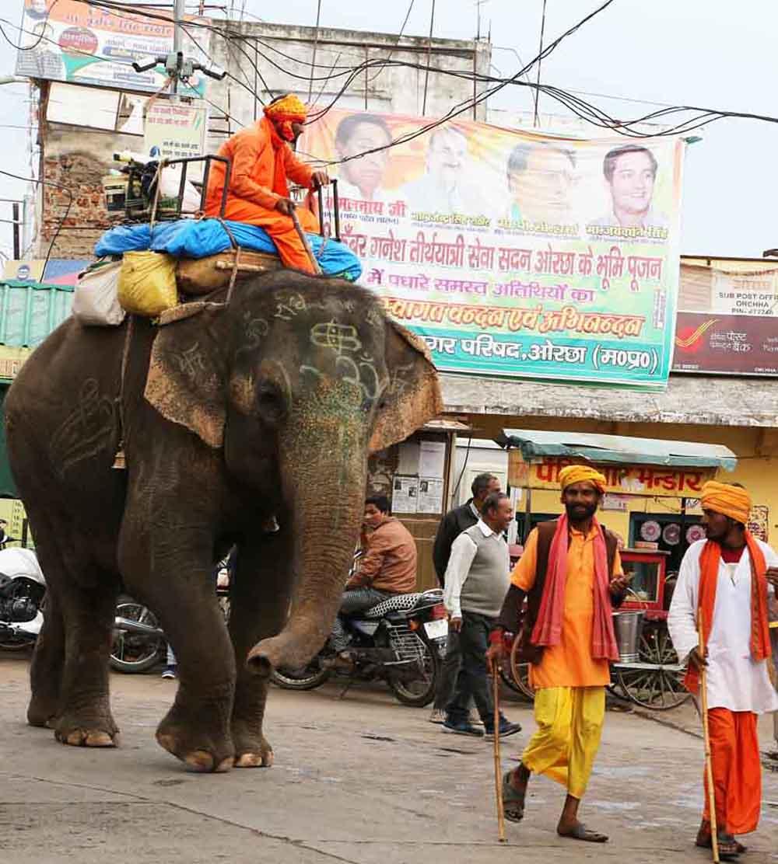 elephant crossroads