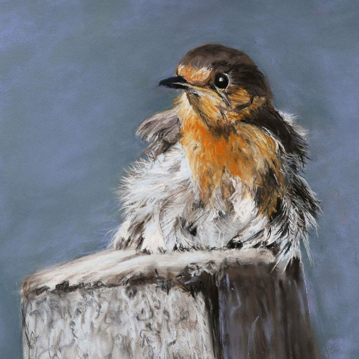 Ros Rouse Hebridean Baby Robin Wings