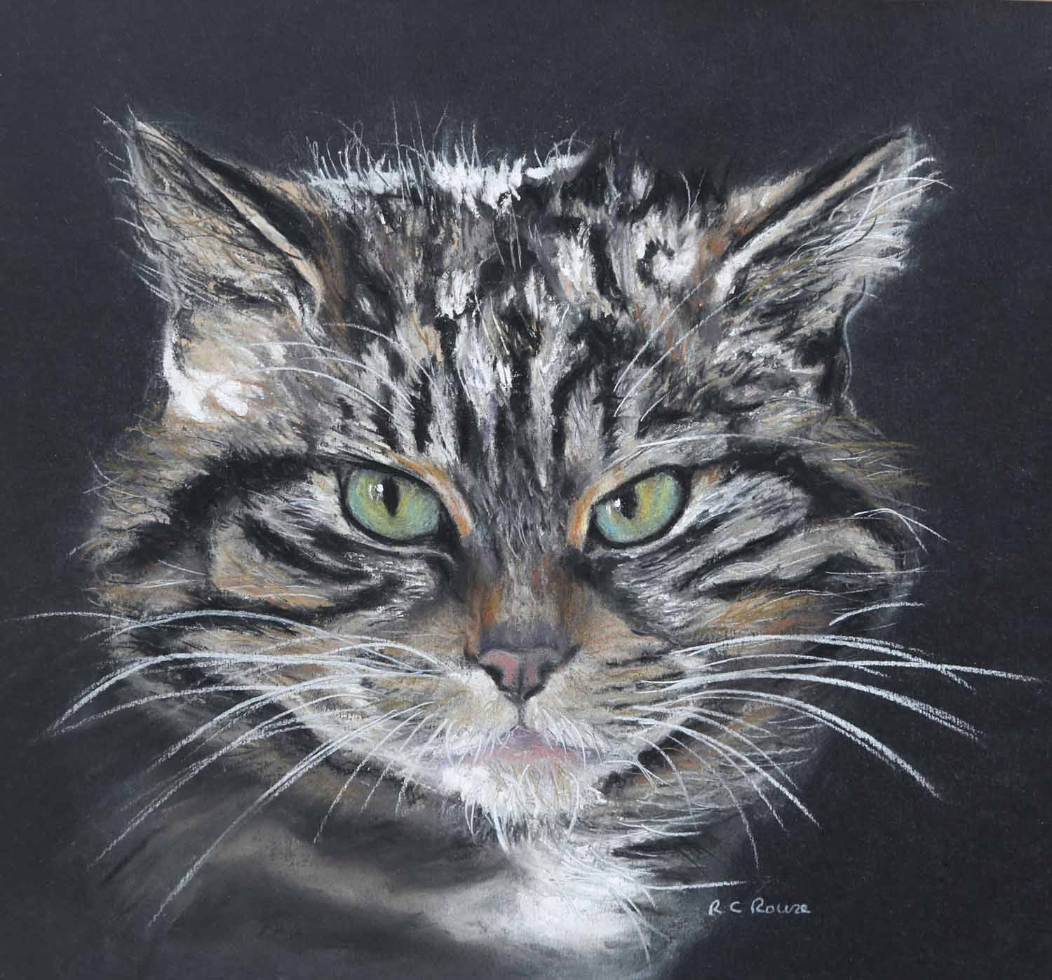 Pastel Painting of a Scottish Wild Cat by Ros Rouse